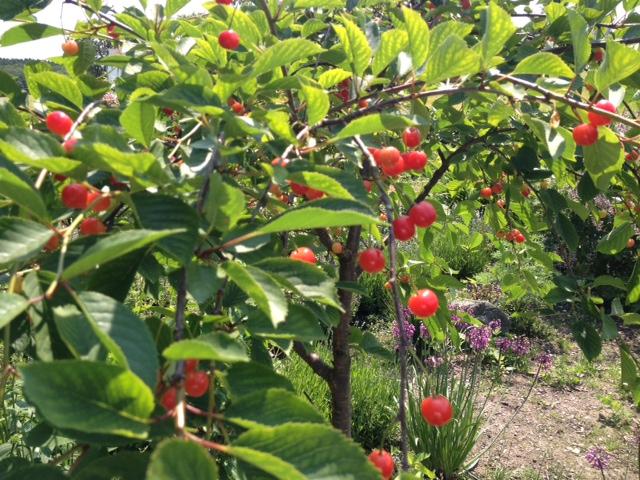 Trädgård O Sånt : Trädgård u matarkivet