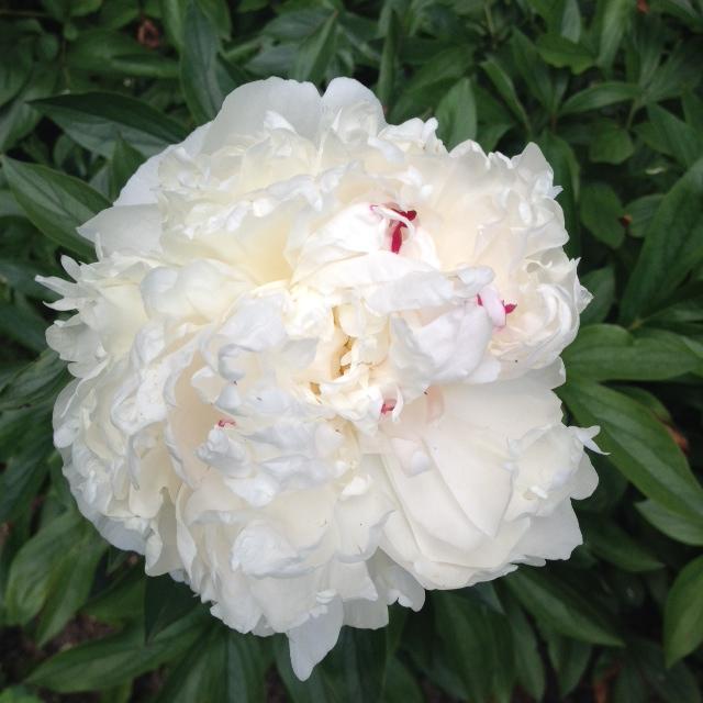 blomma3